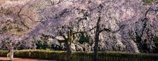 鹿児岛, 大分和京都, 日本